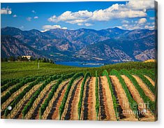 Vineyard In The Mountains Acrylic Print