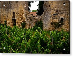 Vineyard In The Ruins Acrylic Print by Christine Burdine