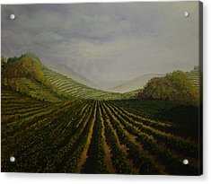 Vineyard Acrylic Print by Mark Golomb