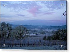 Vineyard Morning Light Acrylic Print by Jean Noren