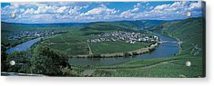 Vineyard Moselle River Germany Acrylic Print by Panoramic Images