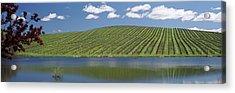 Vineyard Near A Lake, Napa County Acrylic Print by Panoramic Images