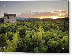 Vineyard Near Malemort-du-comtat Acrylic Print by Andy Kerry