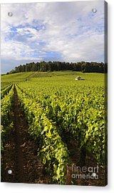 Vineyard Near Monthelie. Burgundy. France. Europe Acrylic Print by Bernard Jaubert