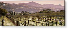 Vineyard On A Landscape, Asti Acrylic Print by Panoramic Images