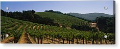 Vineyard On A Landscape, Napa Valley Acrylic Print by Panoramic Images