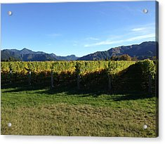 Vineyard Acrylic Print by Ron Torborg