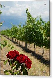 Vineyard Rose Acrylic Print