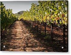 Vineyard Soil Of Sonoma Acrylic Print by Kent Sorensen