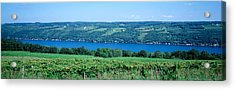 Vineyard With A Lake In The Background Acrylic Print