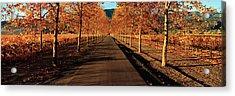 Vineyards Along A Road, Beaulieu Acrylic Print by Panoramic Images