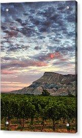 Vineyards And Mt Garfield Acrylic Print by Ronda Kimbrow