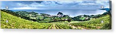 Vineyards By The Sea Acrylic Print