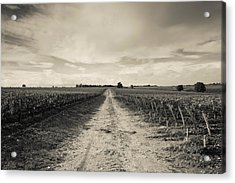 Vineyards In Autumn, Pauillac, Haut Acrylic Print by Panoramic Images