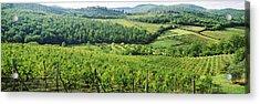 Vineyards In Chianti Region, Tuscany Acrylic Print
