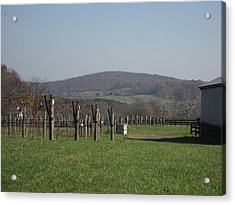 Vineyards In Va - 121229 Acrylic Print