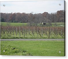Vineyards In Va - 121234 Acrylic Print by DC Photographer
