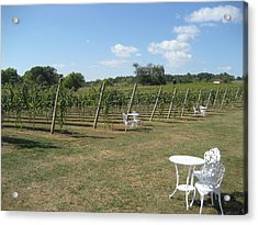 Vineyards In Va - 121240 Acrylic Print by DC Photographer