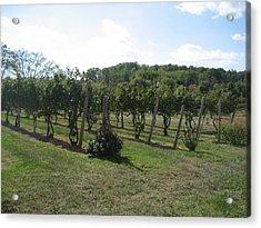 Vineyards In Va - 121251 Acrylic Print by DC Photographer
