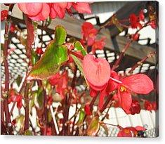 Vineyards In Va - 121252 Acrylic Print by DC Photographer