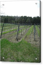Vineyards In Va - 121257 Acrylic Print
