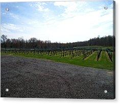 Vineyards In Va - 121267 Acrylic Print by DC Photographer