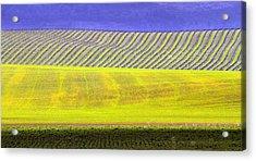 Vineyards Acrylic Print by Rebecca Cozart