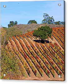 Vineyards Acrylic Print