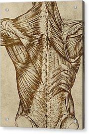Vintage Back Anatomy Acrylic Print by Flo Karp