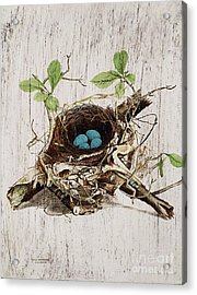 Vintage Bird Nest French Botanical Art Acrylic Print by Cranberry Sky