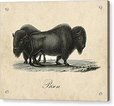 Vintage Bison Acrylic Print