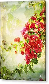Vintage Bougainvillea San Diego California Acrylic Print by Marianne Campolongo