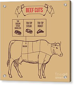 Vintage Butcher Cuts Of Beef Scheme Acrylic Print by Dimair