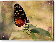 Vintage Butterfly Card Acrylic Print