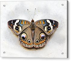 Vintage Butterfly Acrylic Print