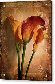 Acrylic Print featuring the photograph Vintage Calla Lily by Jessica Jenney