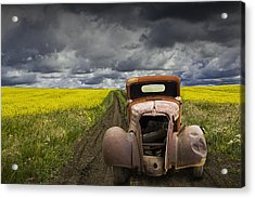 Vintage Chevy Pickup On A Dirt Path Through A Canola Field Acrylic Print