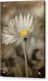 Vintage Daisy Acrylic Print by Joann Vitali