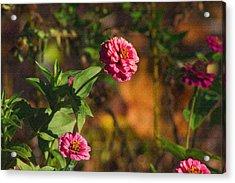Vintage Flower Acrylic Print by Rhonda Humphreys