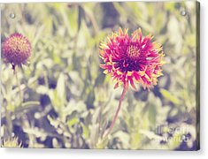 Acrylic Print featuring the photograph Vintage Flowers by Mohamed Elkhamisy