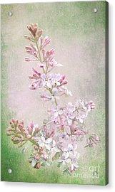 Vintage Lilac Acrylic Print