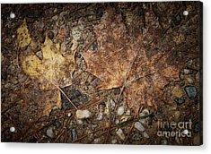 Vintage Maple Leaf Acrylic Print by Jolanta Meskauskiene