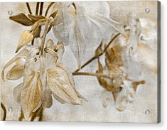 Acrylic Print featuring the photograph Vintage Neutral Flowers by Peggy Collins