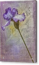 Vintage Pourpre Iris Acrylic Print by Chanin Green