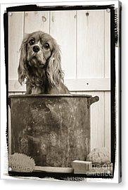 Vintage Puppy Bath Acrylic Print by Edward Fielding