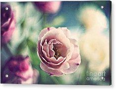 Vintage Rose Acrylic Print by Catherine MacBride