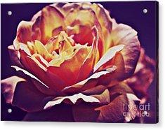 Vintage Rose Acrylic Print by Judy Palkimas