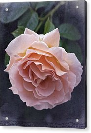 Vintage Rose No. 5 Acrylic Print by Richard Cummings