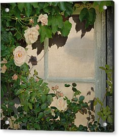 Acrylic Print featuring the photograph Vintage Rose by Sally Banfill