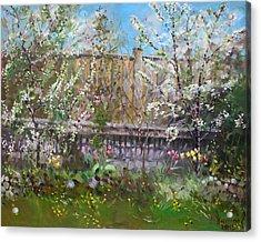Viola's Apple And Cherry Trees Acrylic Print by Ylli Haruni